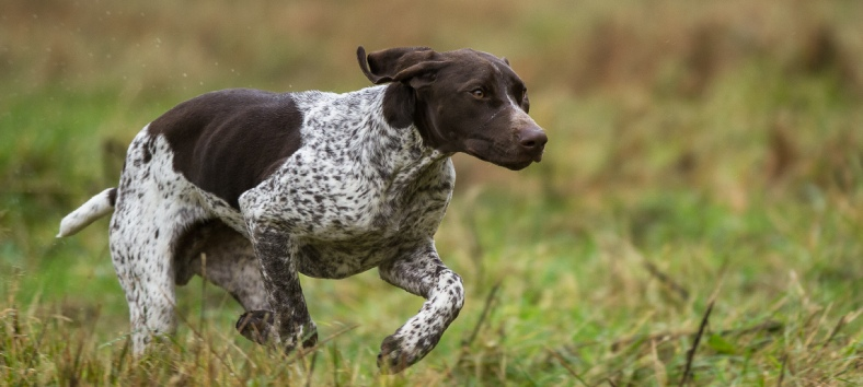 Lakeland Gundog Club